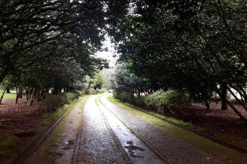 Park in Santo da Serra