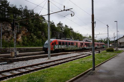 Wilgen Knotten HWL 2017