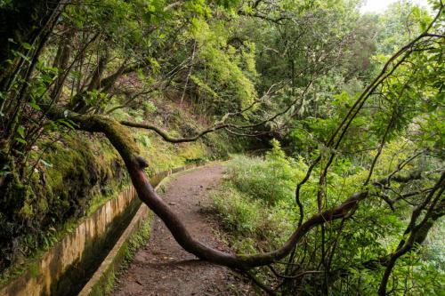 Groen langs de Levada do Furado