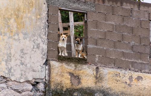 Overal zien we honden