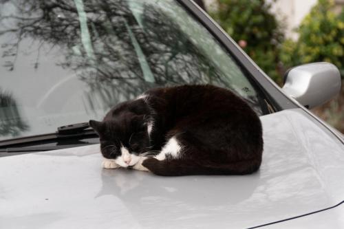 Lekker slapen op de motorkap