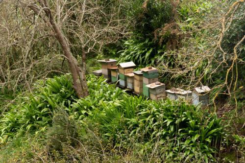 De bijenkorven staan langs het pad